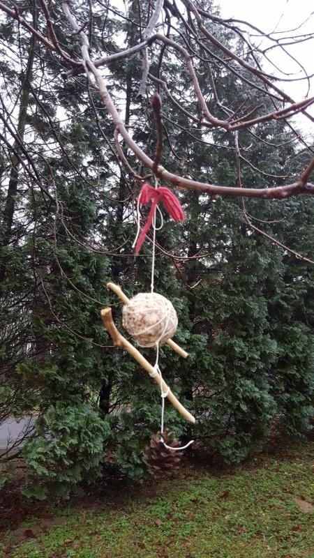 Vogelfutter im Baum (Foto: Dr.A.Weber)