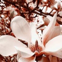 """""""Pavasario stebuklas"""", Paulina 7 kl."""