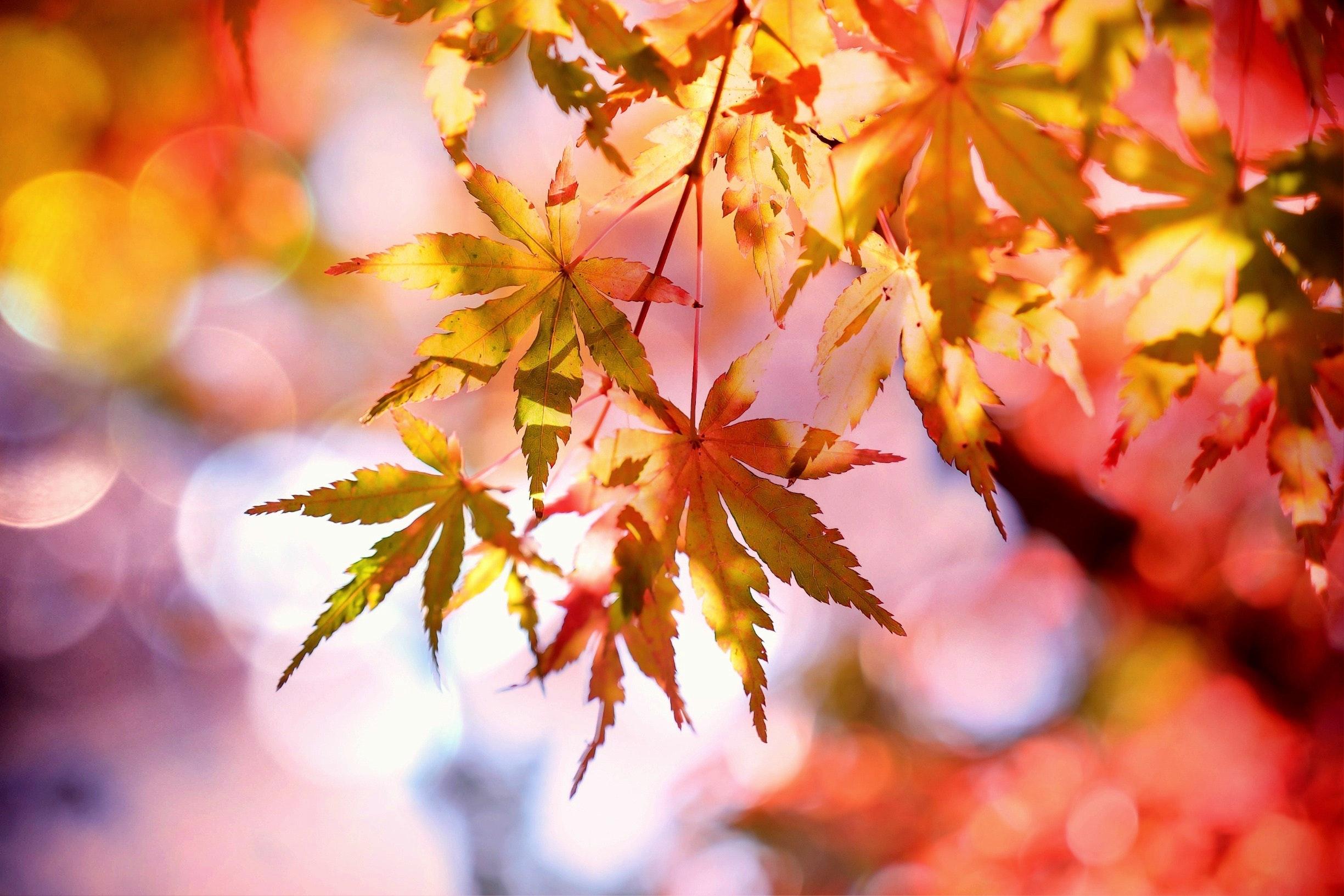 Schöne Herbstferien!!!