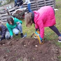 5. Klasse pflanzt Kartoffeln (Foto: Dr. A. Weber)