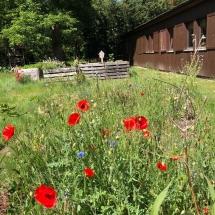 Es blüht und gedeiht im Schulgarten (Foto: A. Diehlmann)